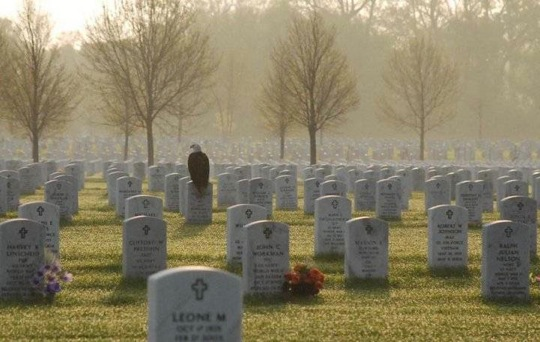 An eagle standing guard at Minneapolis National Cemetery